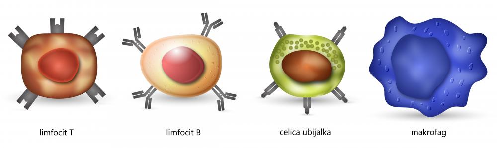 imunski sistem limfocit T, limfocit B, celica ubijalka in makrofag