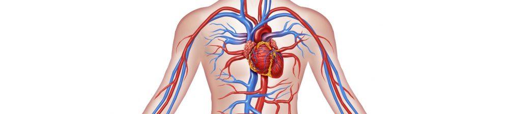 Krvni strdki v venah in arterijah Zapper Zaper Zaperino terapija za uničevanje parazitov